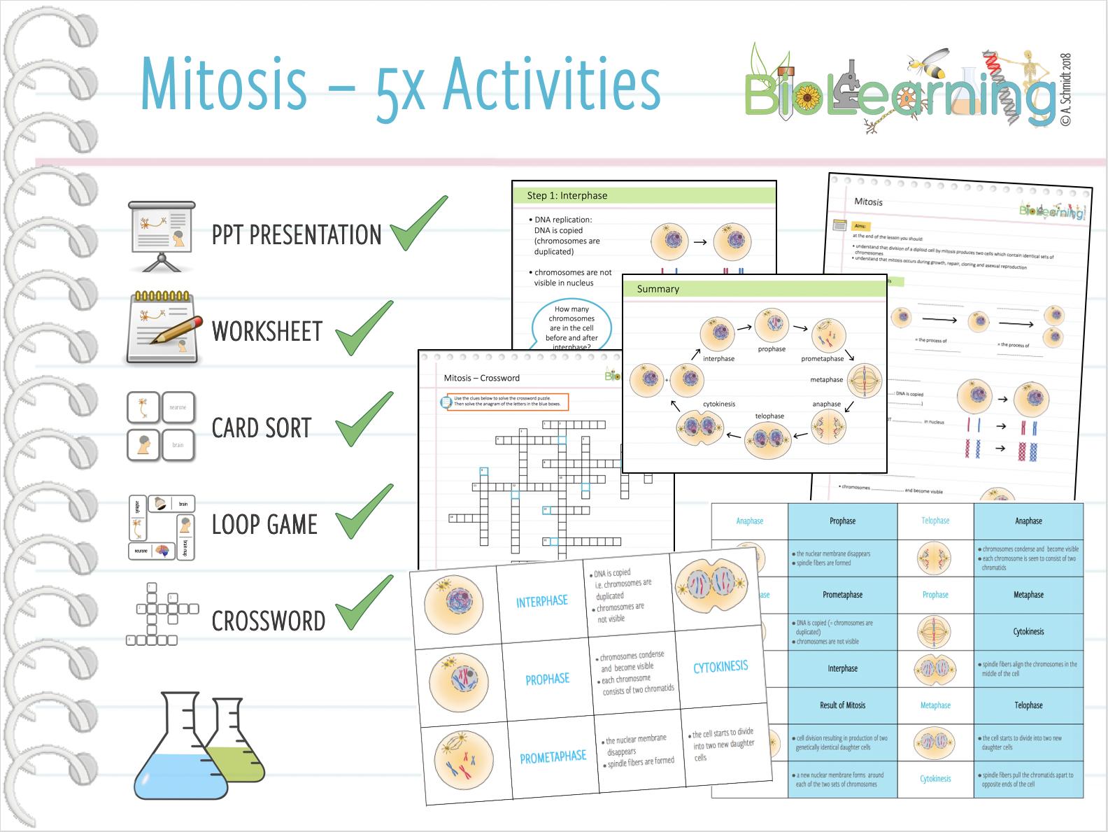 Mitosis - 5x Activities Bundle (KS4)