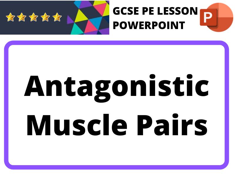 GCSE PE - Antagonistic Muscle Pairs