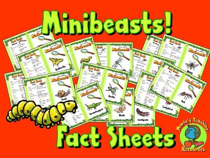 Minibeasts Fact Sheets