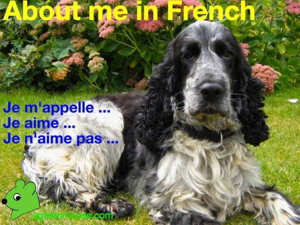 Je m'appelle - About me in French - Video + Worksheets