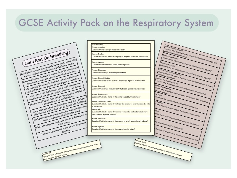 GCSE Activity Pack Bundle on the Ciculatory, Respiratory and Digestive System