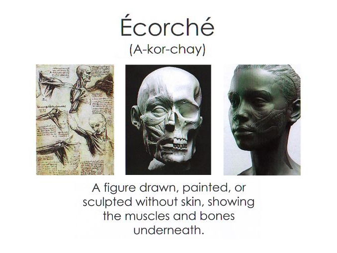 Ecorche - Natural Forms and Skulls