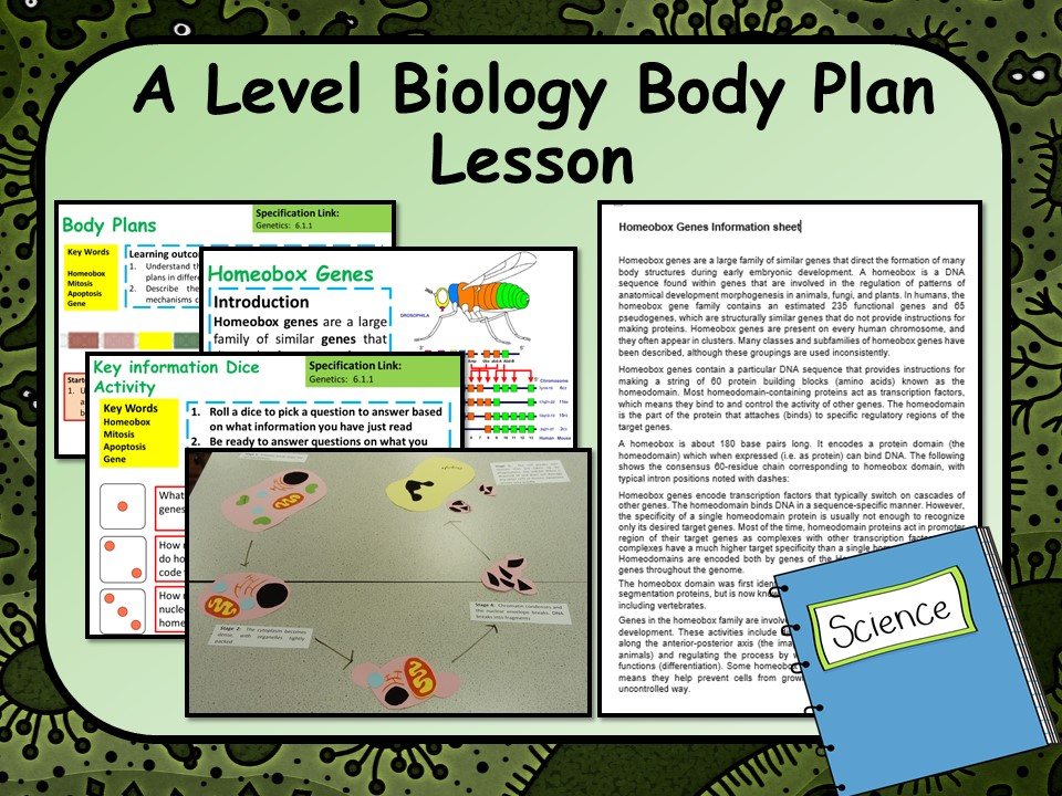 KS5 A Level Biology Body Plans Lesson