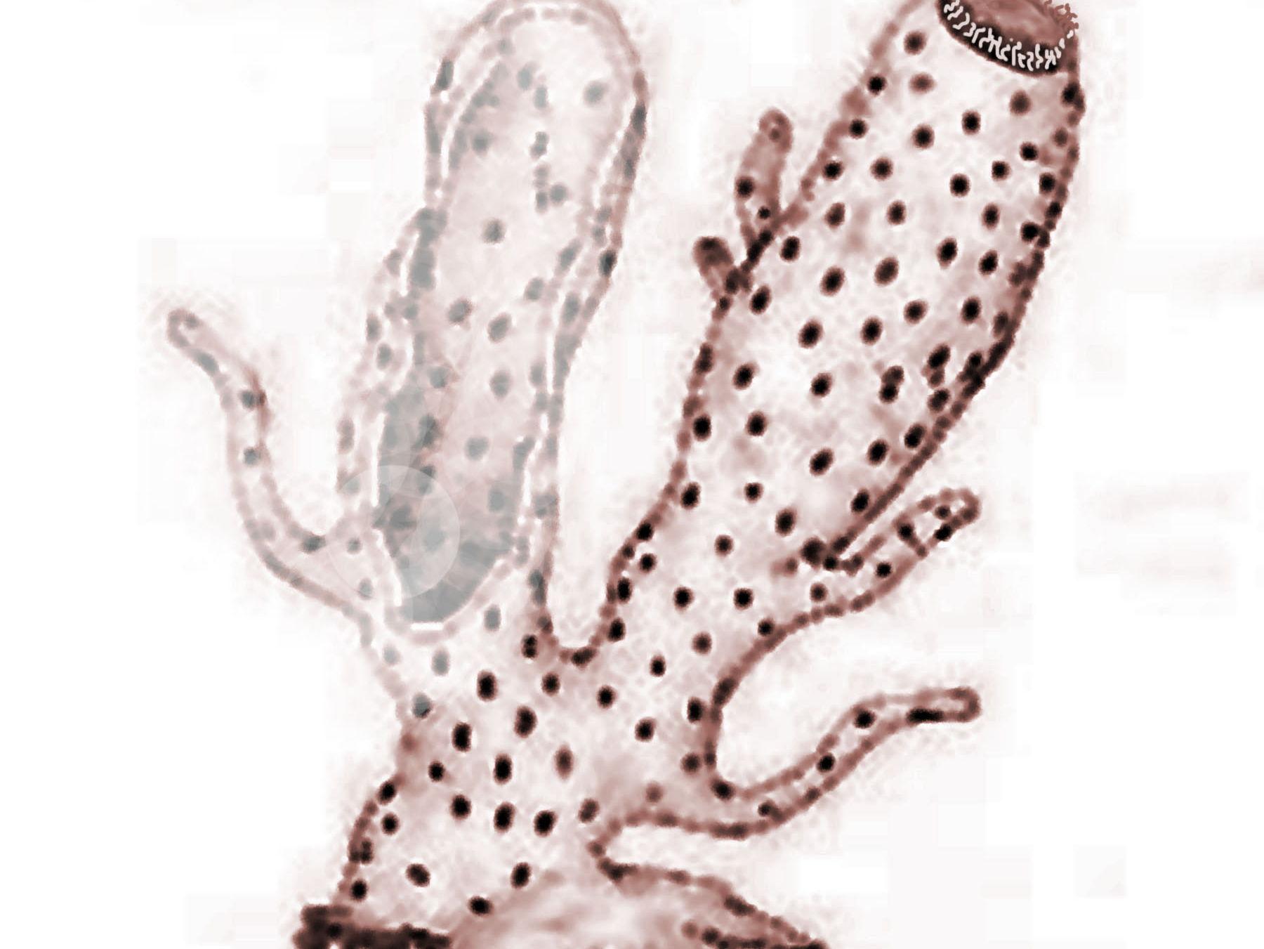 Invertebrates - external parts