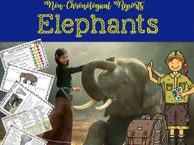 Non Chronological Reports - The Elephant