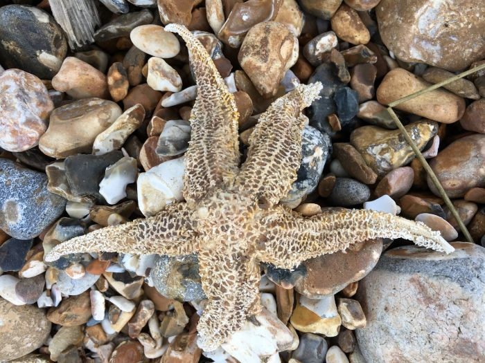 Dead Starfish on the Beach, Portsmouth, England