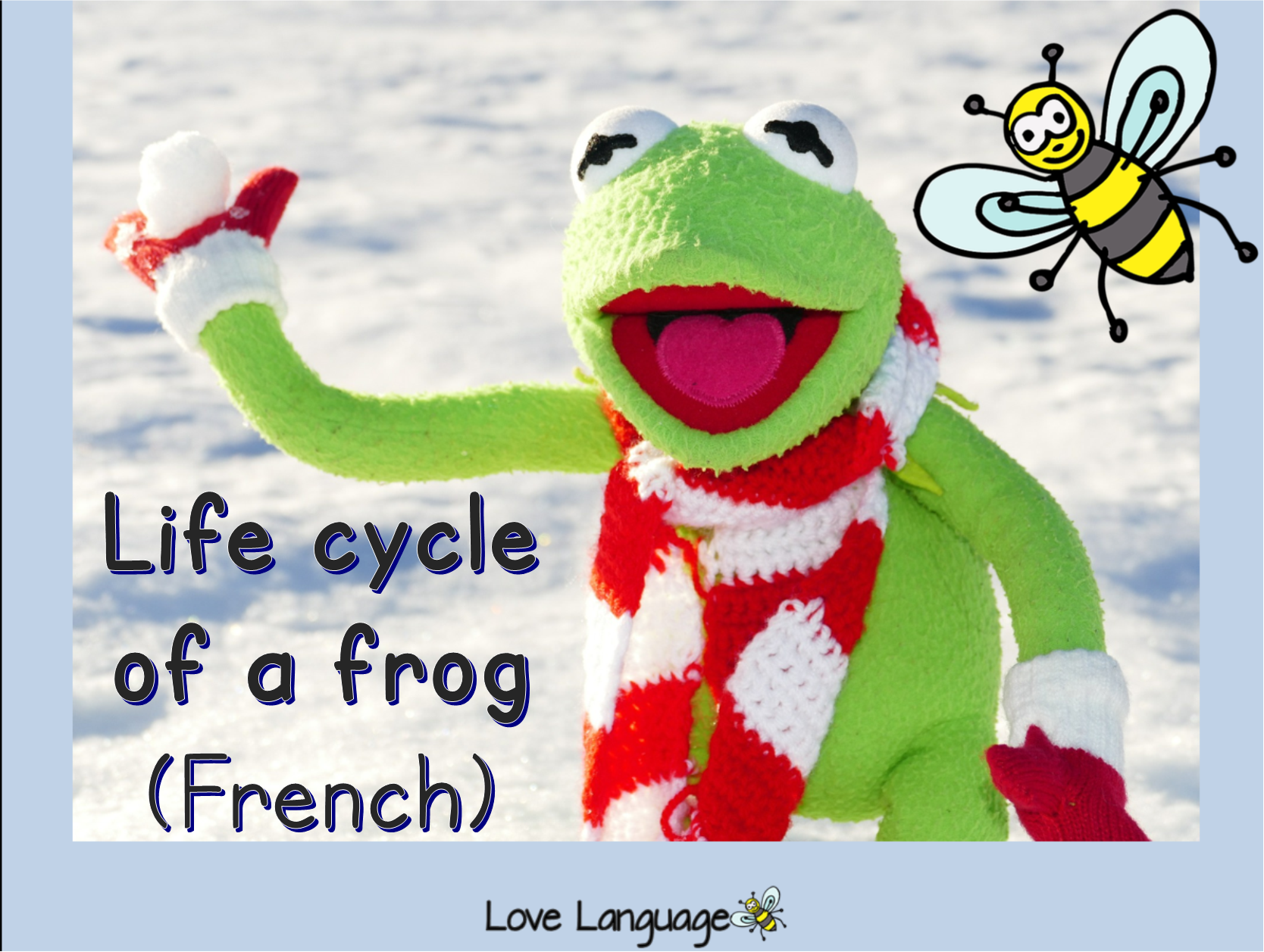 Life cycle of a frog in French bundle