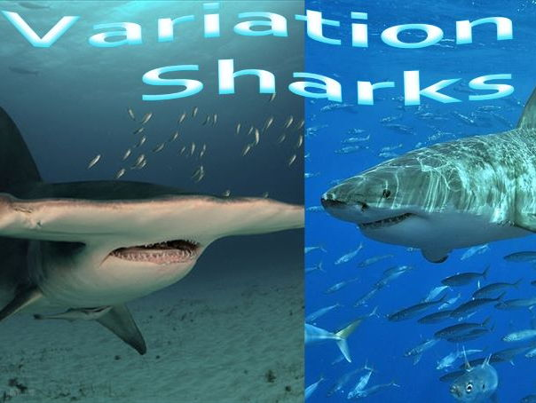 KS 1 & 2 Power-point : Variation in Sharks.