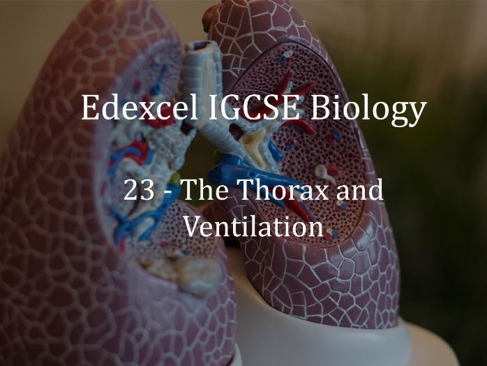 Edexcel IGCSE Biology Lecture 23 - The Thorax and Ventilation