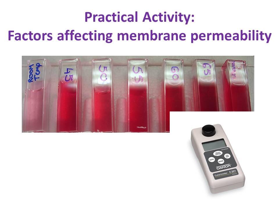 Signalling Factors & Membrane Permeability