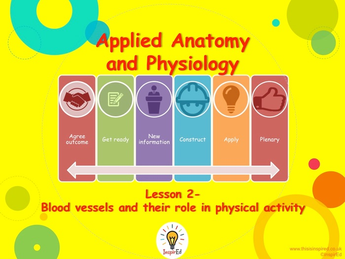 NEW Edexcel GCSE PE Unit 1 – Topic 1.2 – Cardiovascular System Lesson 2 – Blood Vessels (PowerPoin