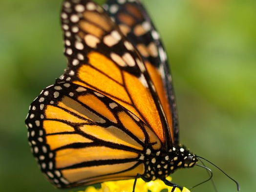 Monarch Butterflies / Pollution in Mexico City; 2 thematic units - Intermediate 1