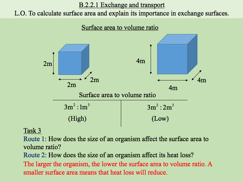 Exchange and Transport / Surface Area / Exchange Surfaces / Surface Area to Volume Ratio