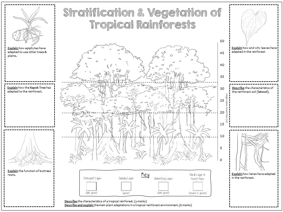 GCSE: Rainforest Layers and Plant Adaptations Colouring Revision Sheet
