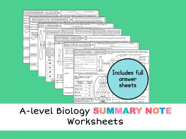 A-level Biology A2 Inheritance Worksheet Bundle