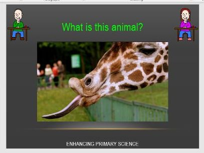 NATURAL SELECTION (GIRAFFES)