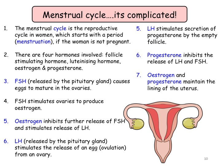115 and 116 Human Reproduction and Hormones in the Menstrual – Menstrual Cycle Worksheet