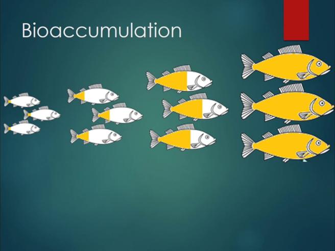 Bioaccumulation Full Lesson