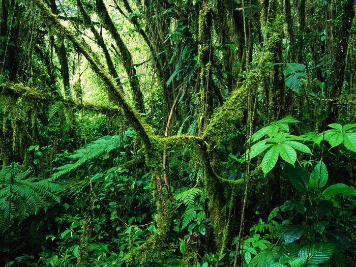 Ecosystems- Rainforests
