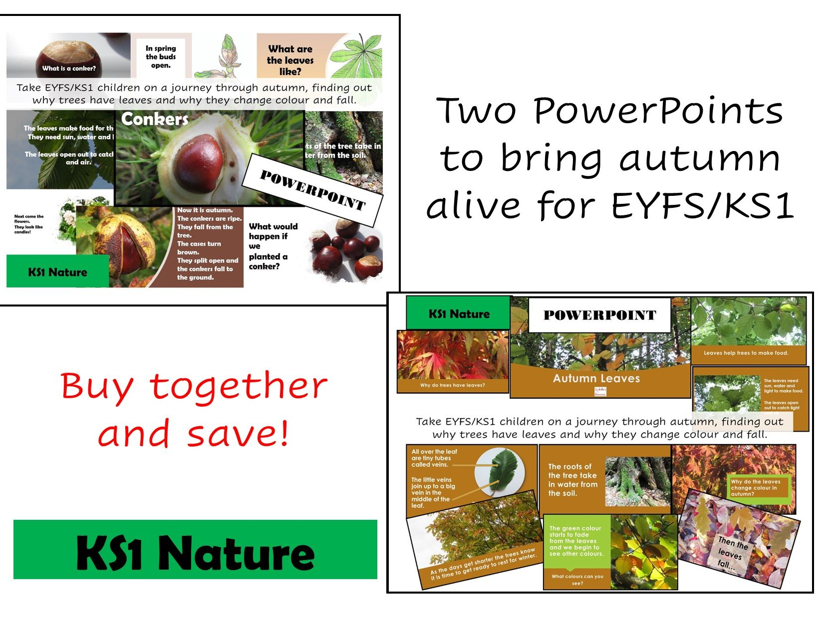 Autumn Leaves/Conkers PowerPoint Bundle