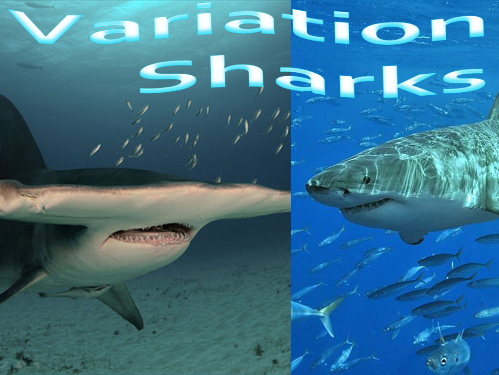 KS1 &2 Sharks (5 resources)