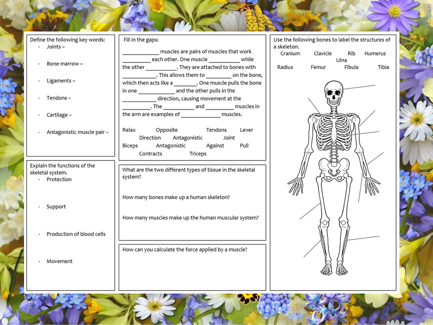 KS3 Skeletal and muscle system revision mat