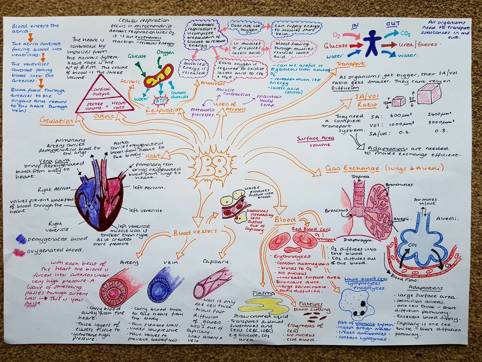 Revision MindMaps Edexcel Combined Science Biology Paper 2