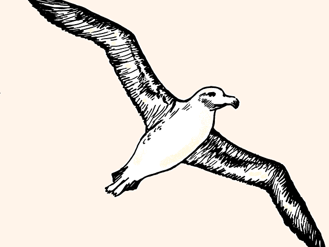 Poem - Albatross (by this author, published)