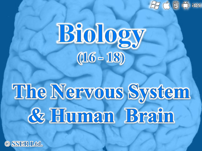 C.1.a-g. The Nervous System & Human Brain