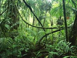 Ecosystems and Tropical Rainforests