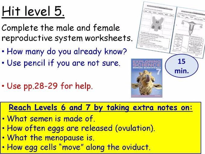 Cells lesson ks3