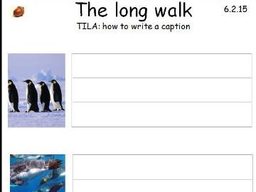 Penguin Information Book Resource Pack- KS1- pages ready to print for children to make booklet.