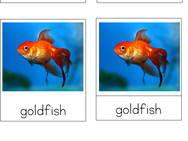 Fish - Montessori 3-Part Cards