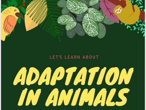 Adaptation - A Project