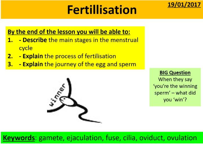 Fertillisation