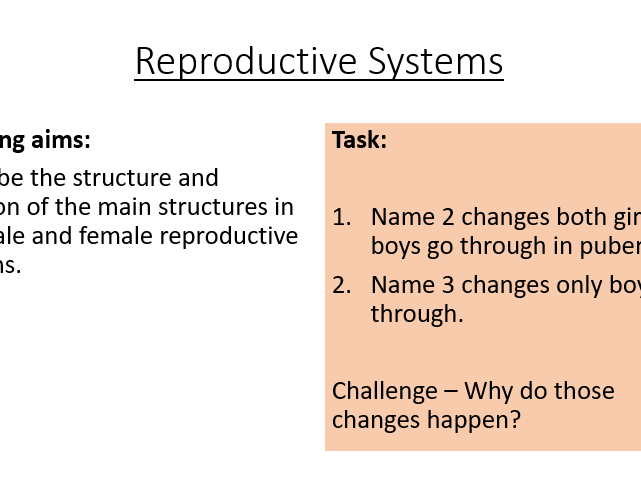 KS3 Reproductive Systems