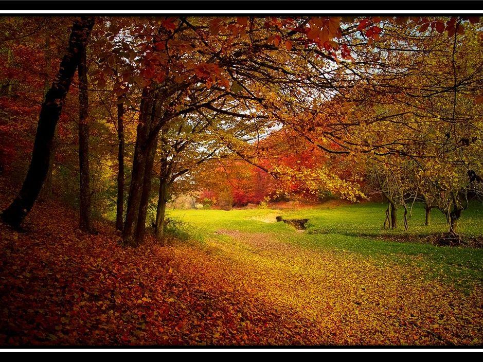 Autumn Environmental Science Bundle