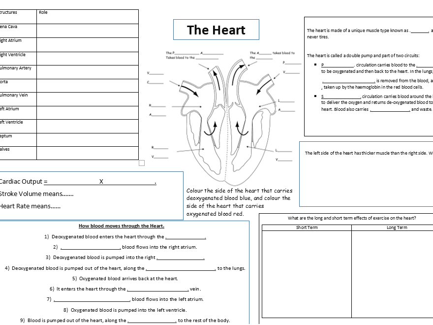 The Heart By Beccir43 Teaching Resources Tes