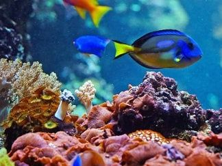 AS Marine Science:  Ecosystems and Biodiversity