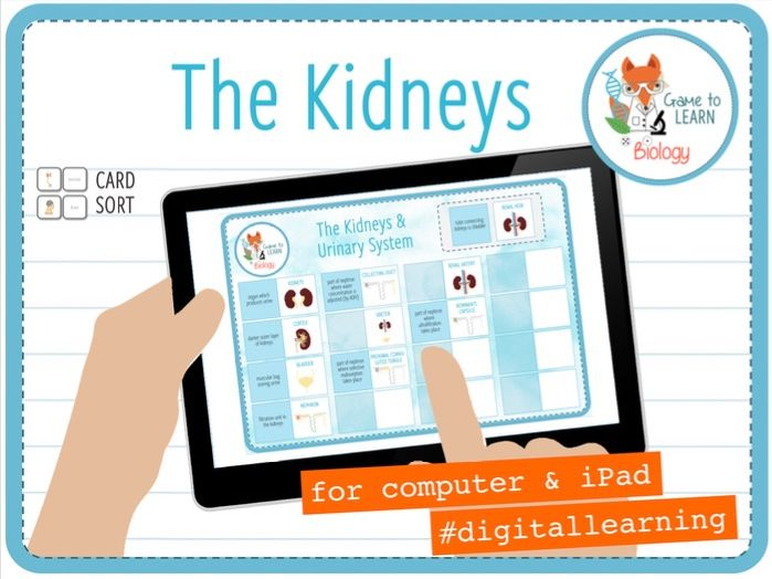 Kidneys and Urinary System - Digital Card Sort (KS4)