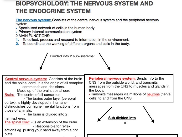 Psychology AQA A level - Biopsychology