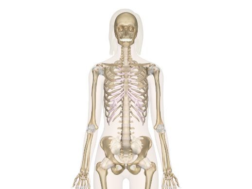 GCSE PE || Skeletal System || Work-book & Powerpoints