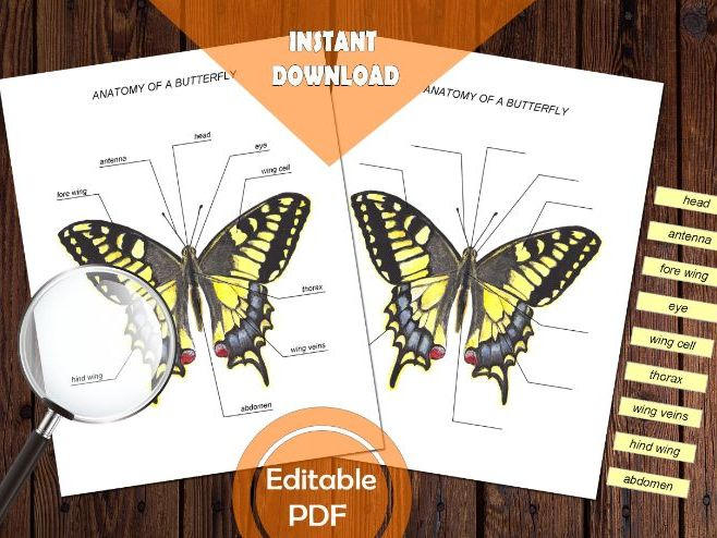 BUTTERFLY ANATOMY / Editable Watercolor / Homeschool Printable / Education Art