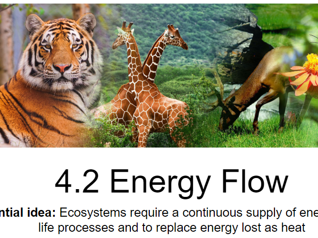 IB Biology - 4. Ecology- PowerPoint Presentations