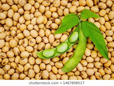 Soya and Tofu - Food Commodities