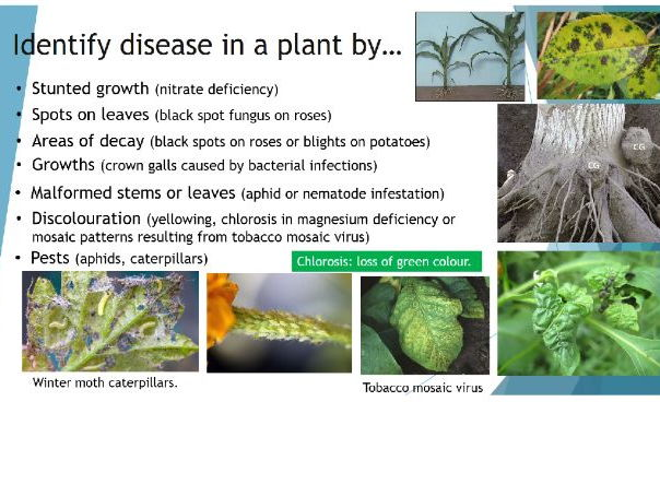 AQA Detection and identification of plant diseases. 4.3.3.1