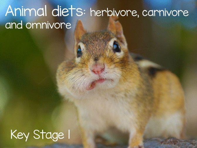 Animal diets: Carnivore, Herbivore and Omnivore KS1