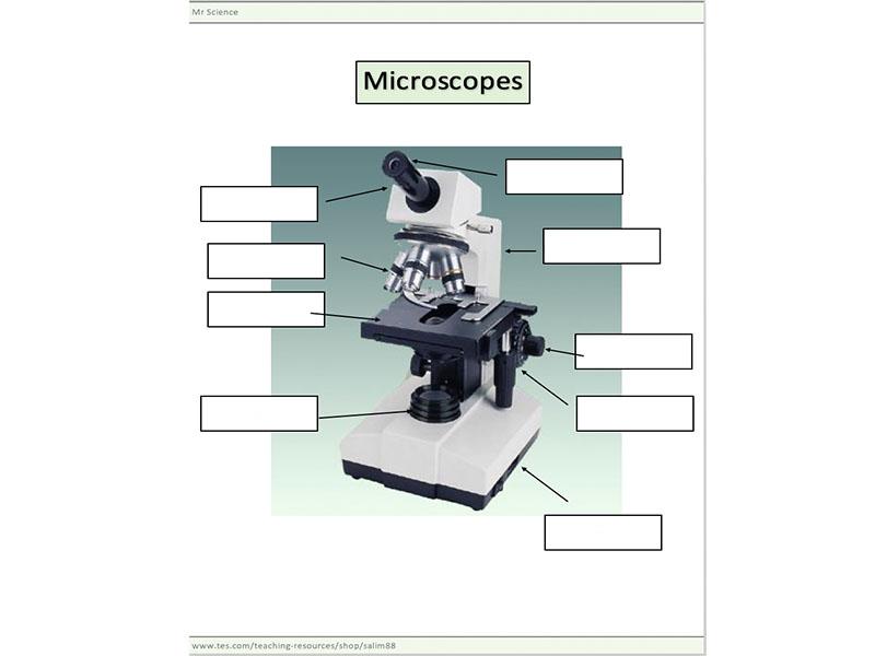 Microscope worksheet