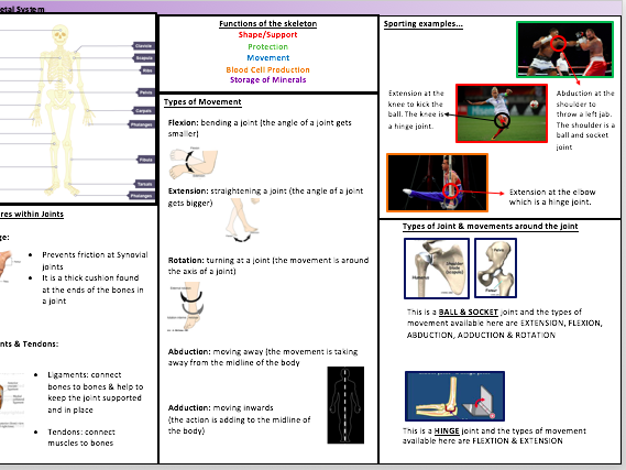 GCSE P.E Skeletal System Knowledge Organiser
