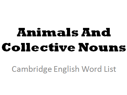The Collective Nouns for a Range of Animals